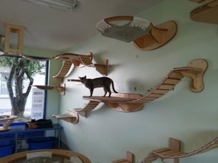 dog climbing on furniture